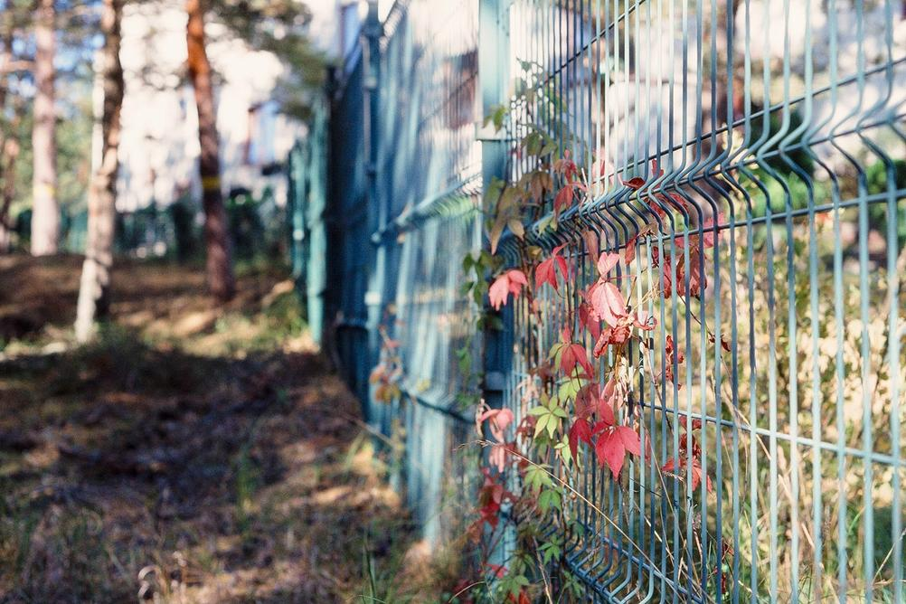 Some colorful leaves on fence.