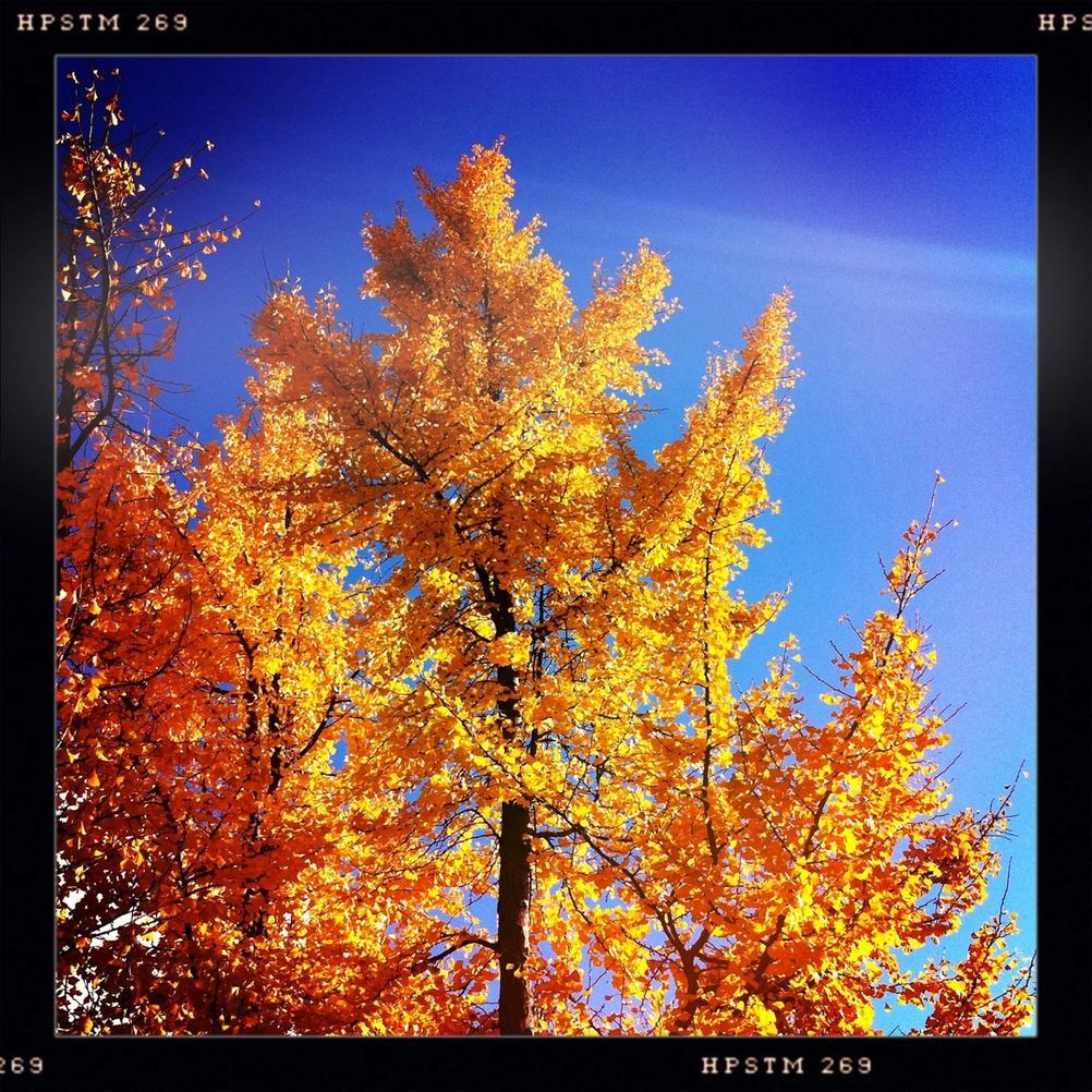 Photo of autumn trees against blue sky.