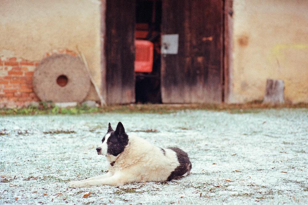 Dog resting on snowy ground.