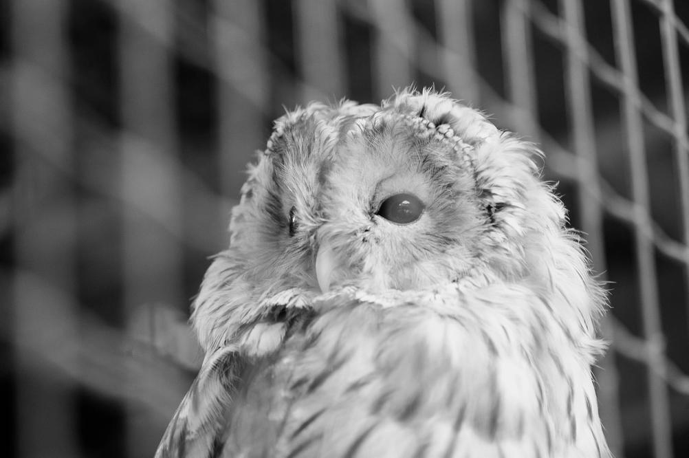 Photo of an owl.