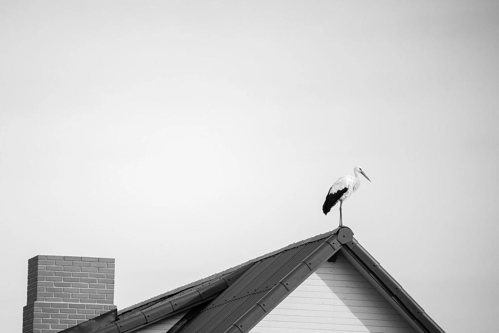 Photo of a stork on a roof.