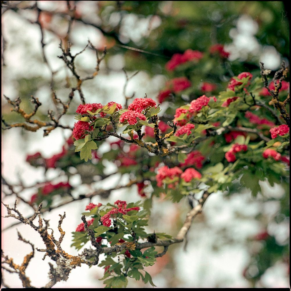 Photo of a tree with bright flowers.