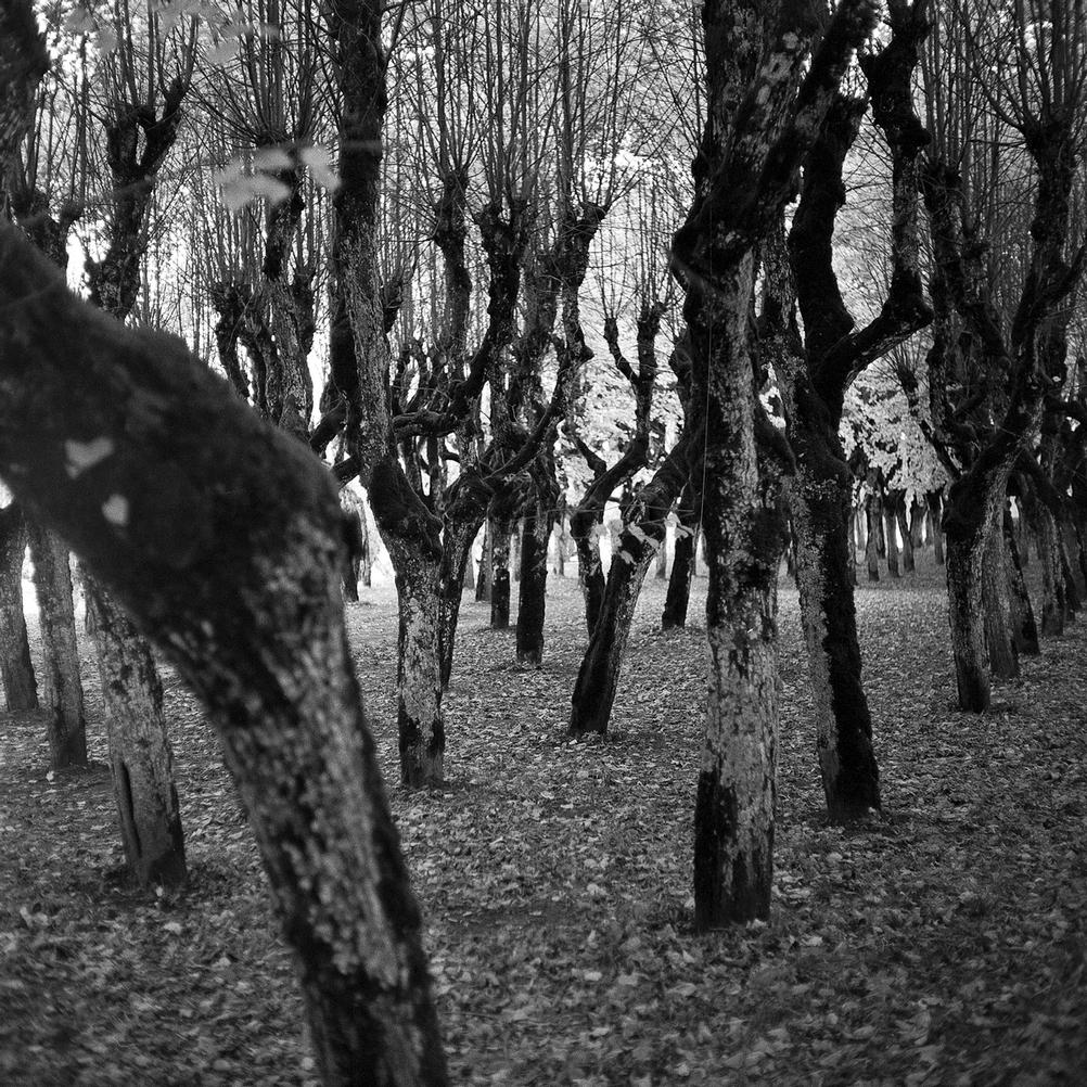 Black and white photo of weird trees.