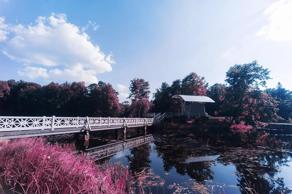 Bridge on water with purple grass around.