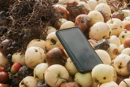 Photo of Samsung S8 on a pile of rotting apples.