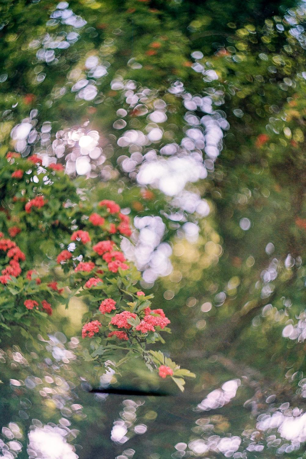 Photo of a blooming tree with swirly bokeh.