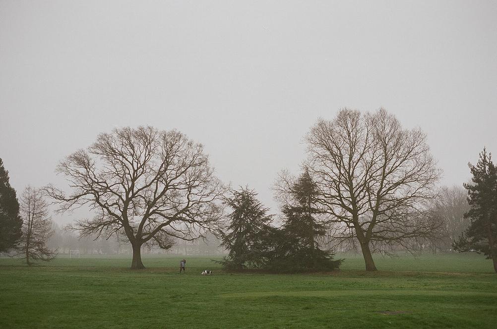 Shot of park in light mist.