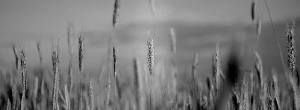 Panoramic macro photo of a field.