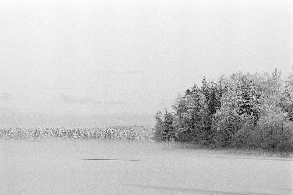Photo of trees in a fog.