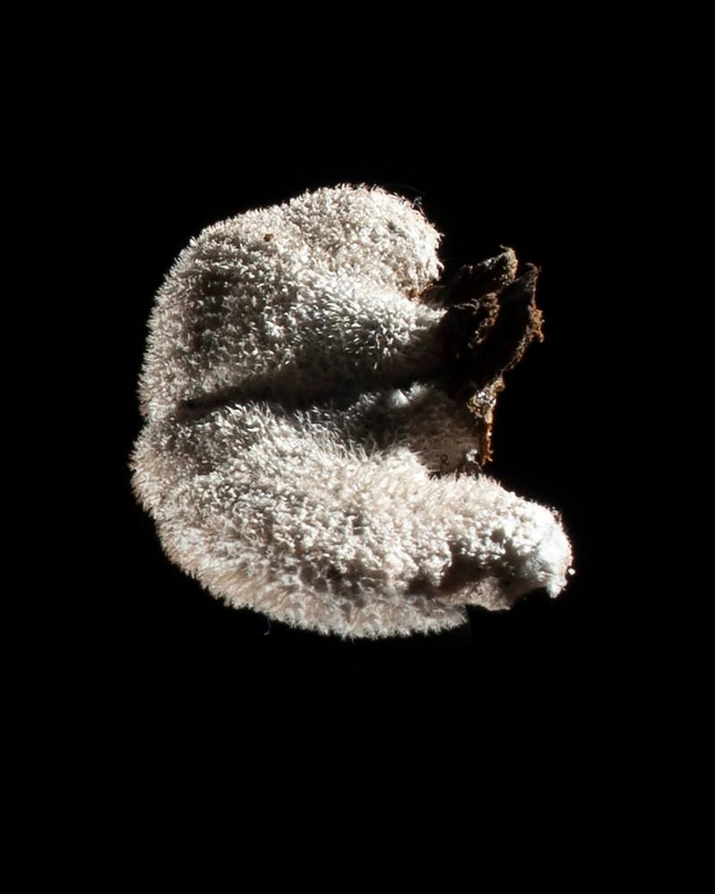 Mushroom: image 26