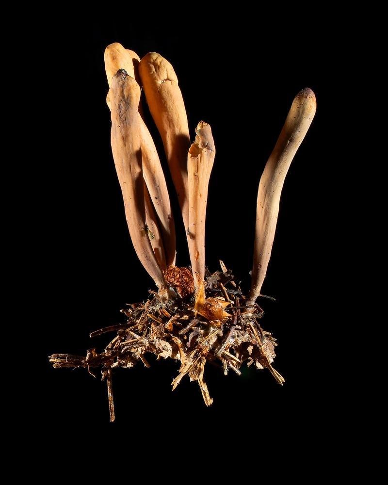 Mushroom: image 2
