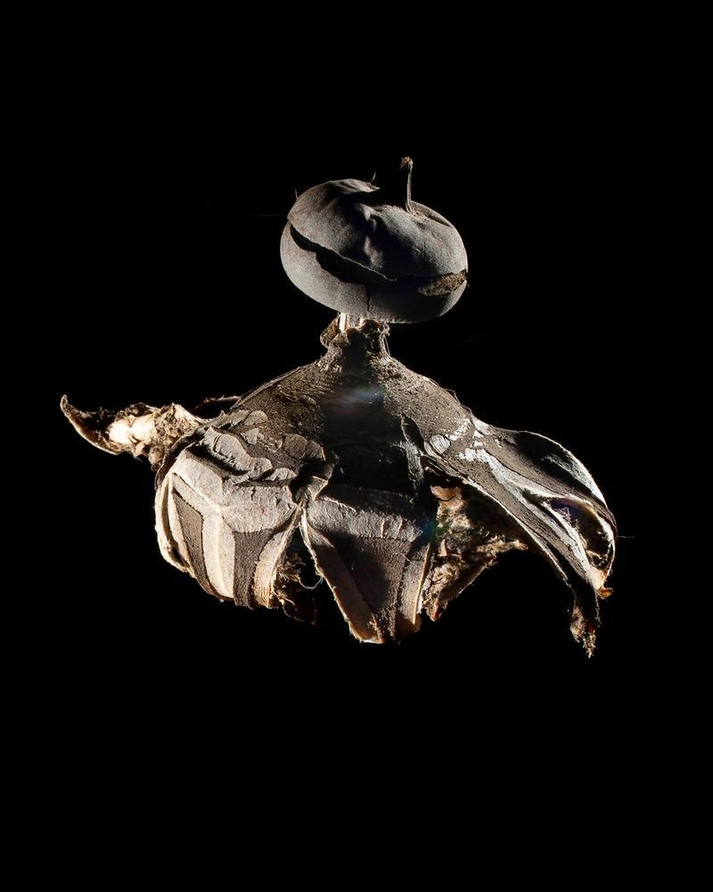 Mushroom: image 14