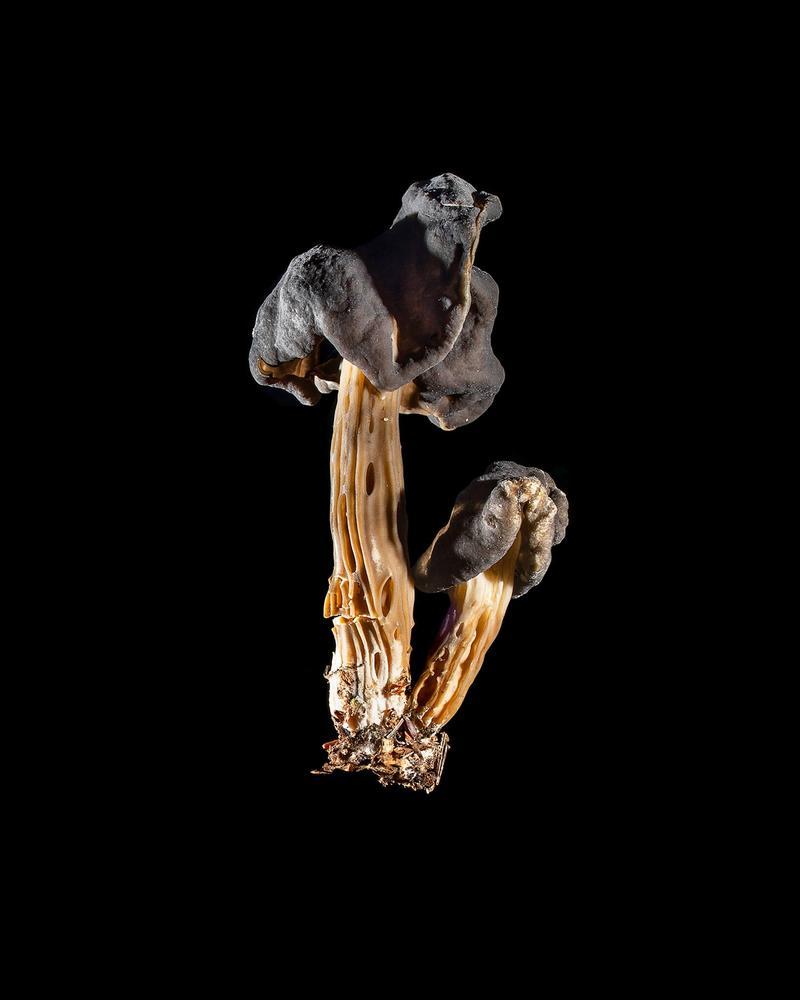 Mushroom: image 22