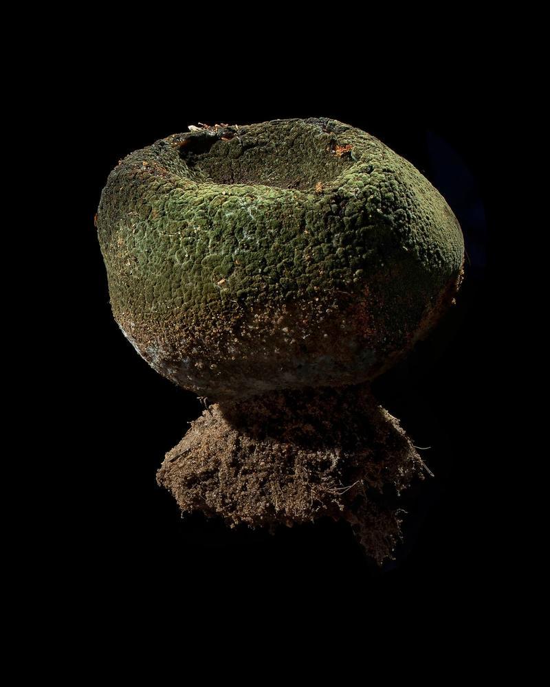 Mushroom: image 3