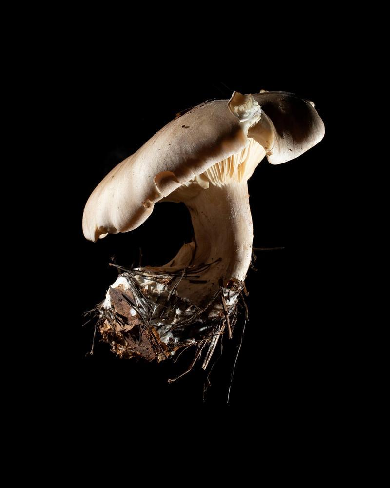 Mushroom: image 4