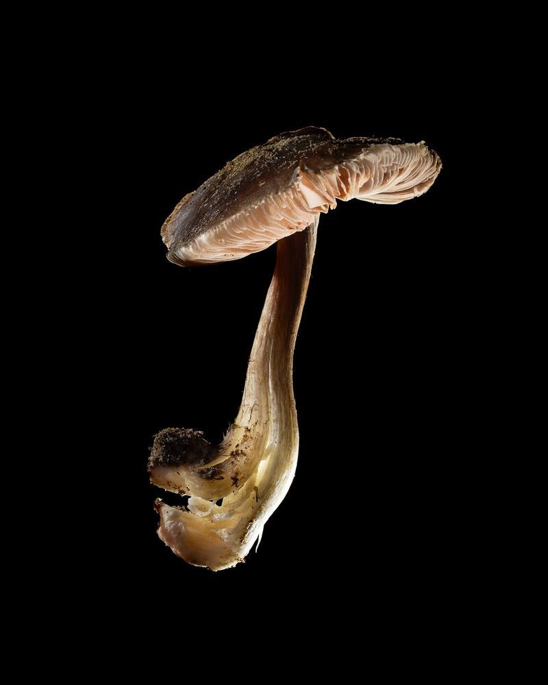 Mushroom: image 16