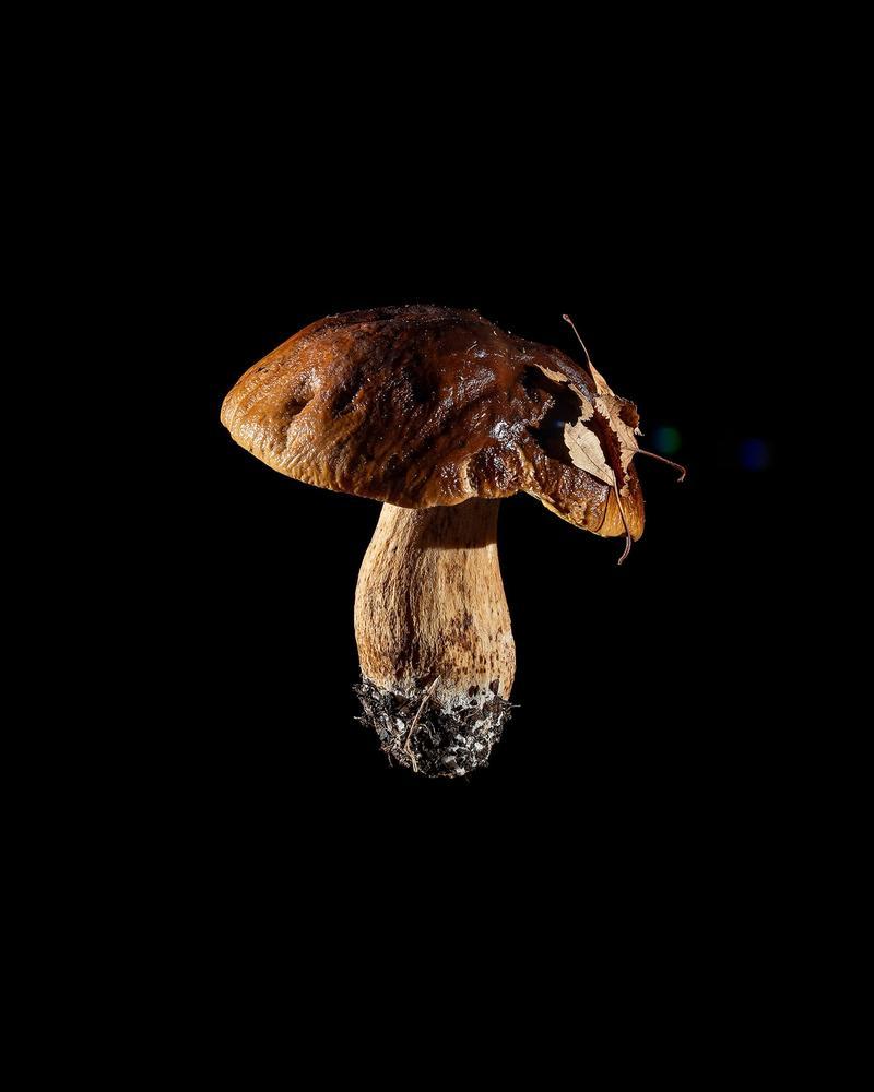 Mushroom: image 27