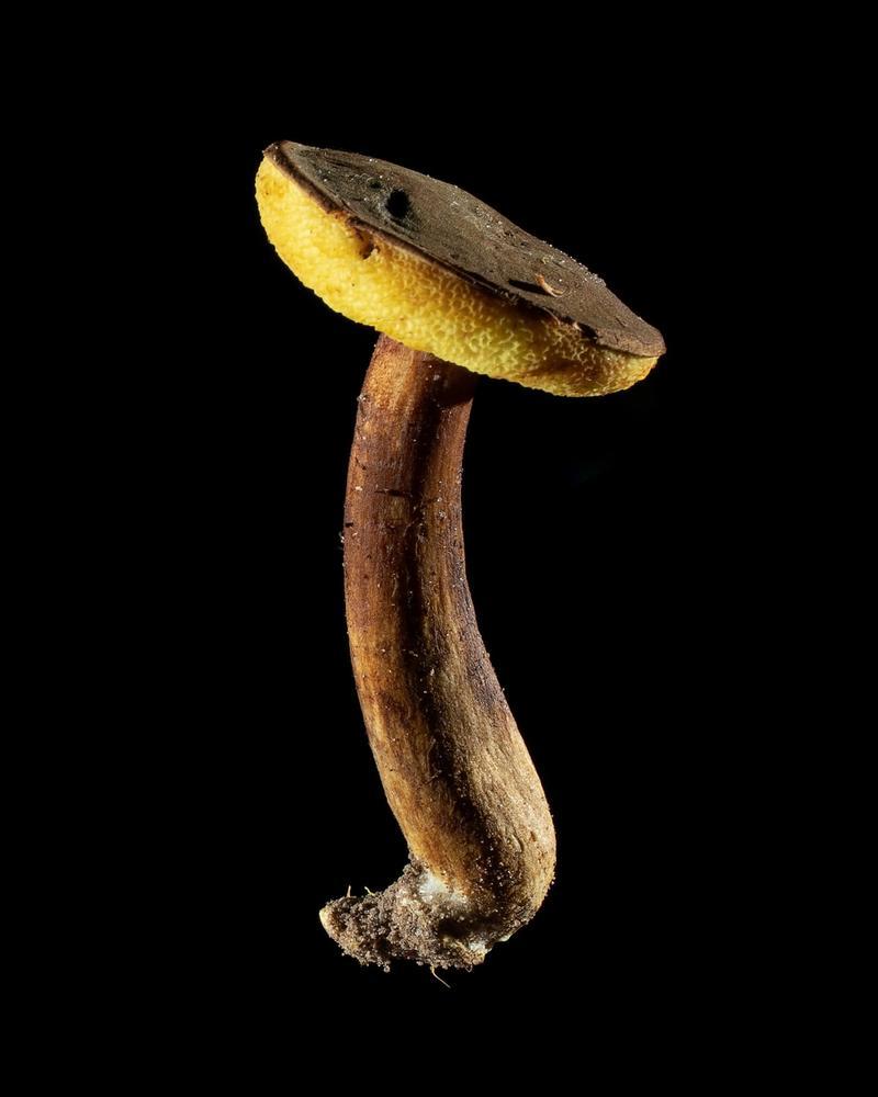 Mushroom: image 8