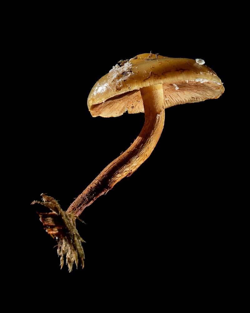 Mushroom: image 28