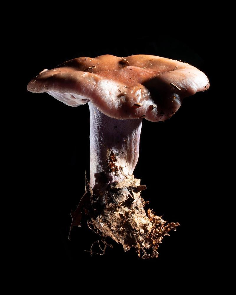 Mushroom: image 10