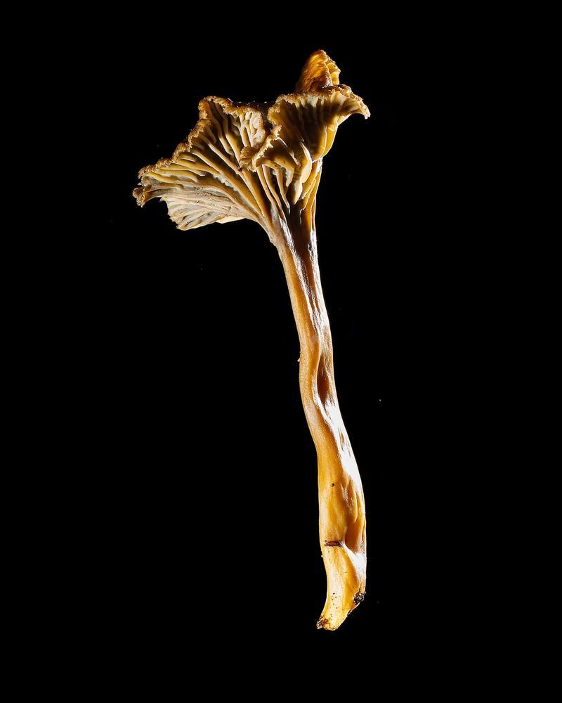 Mushroom: image 19
