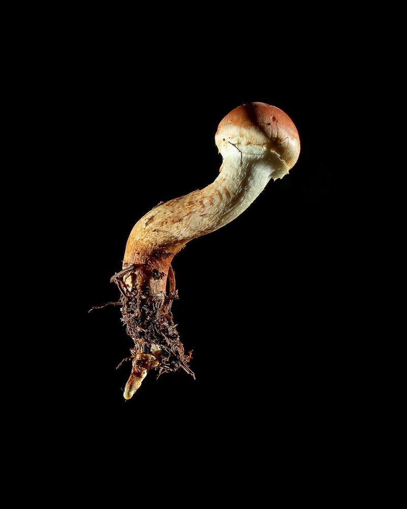 Mushroom: image 32