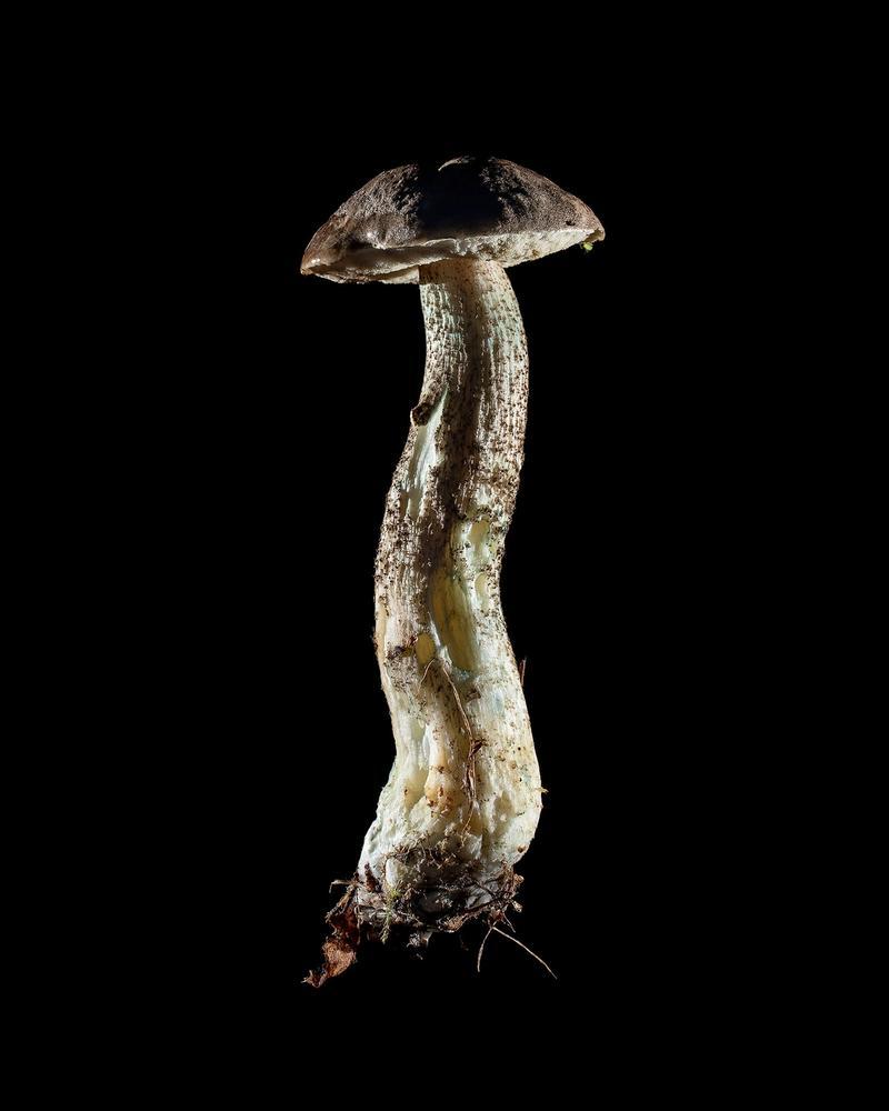 Mushroom: image 29