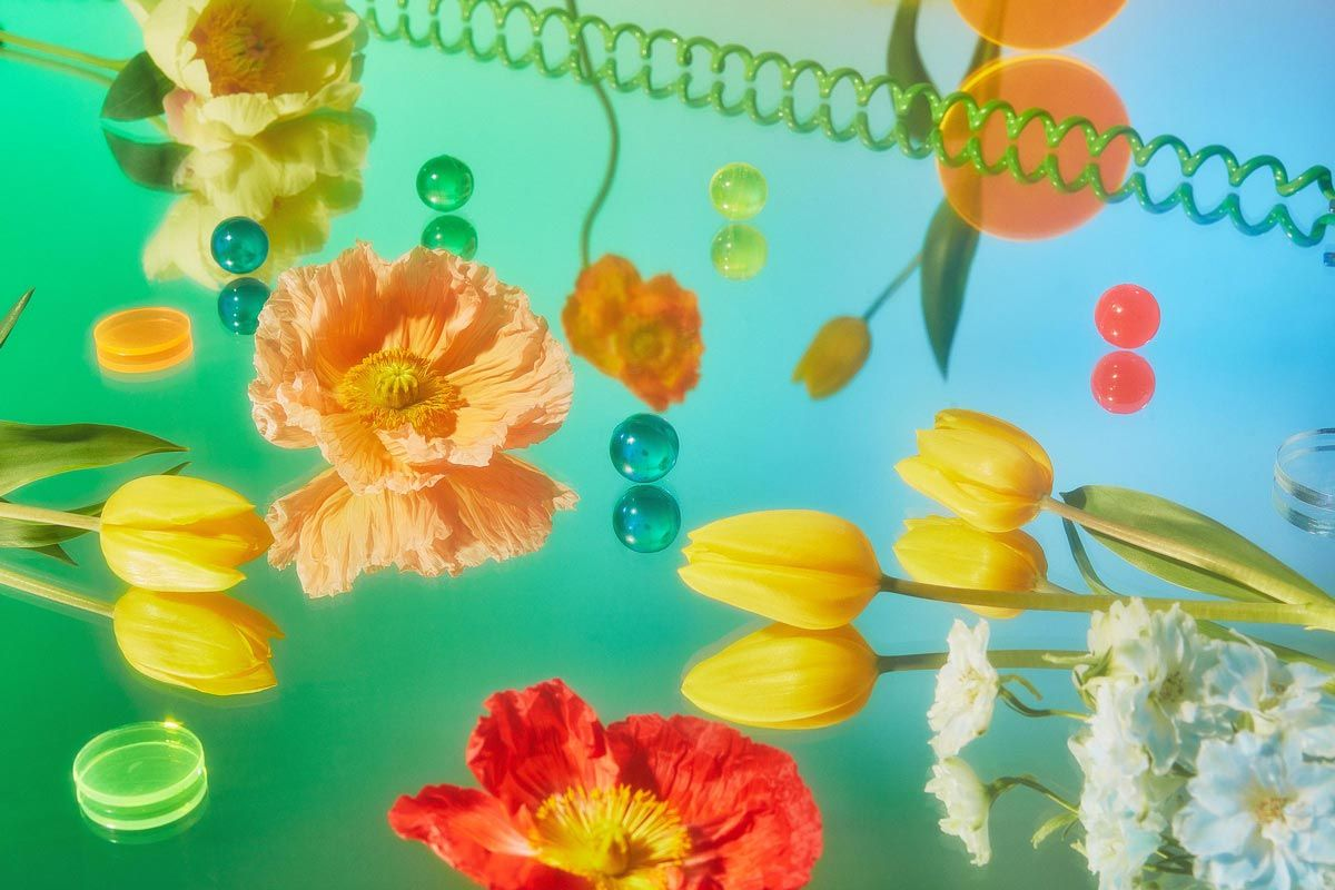 Flowers and pieces of plastic on a green mirrored surface