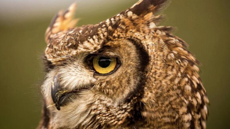 owl-sanctury-beyonk