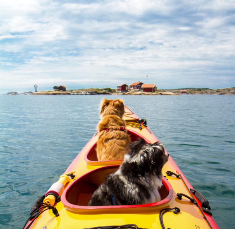 is-kayaking-difficult-dog-on-kayak