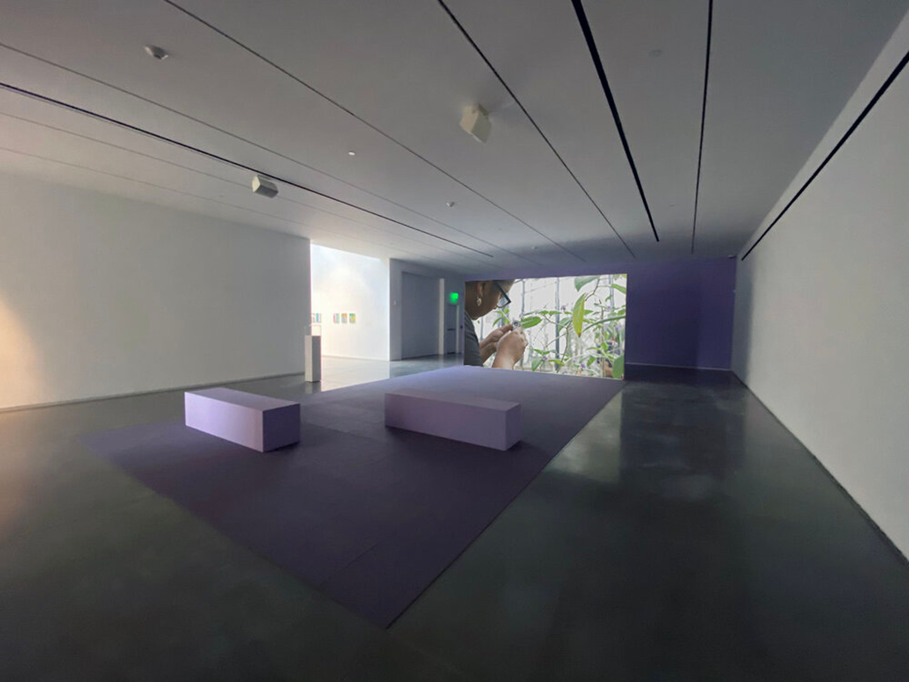 Installation view of There are things in this world that are yet to be named (2020), from the exhibition Unnamed for Decades, Center for Maine Contemporary Art.