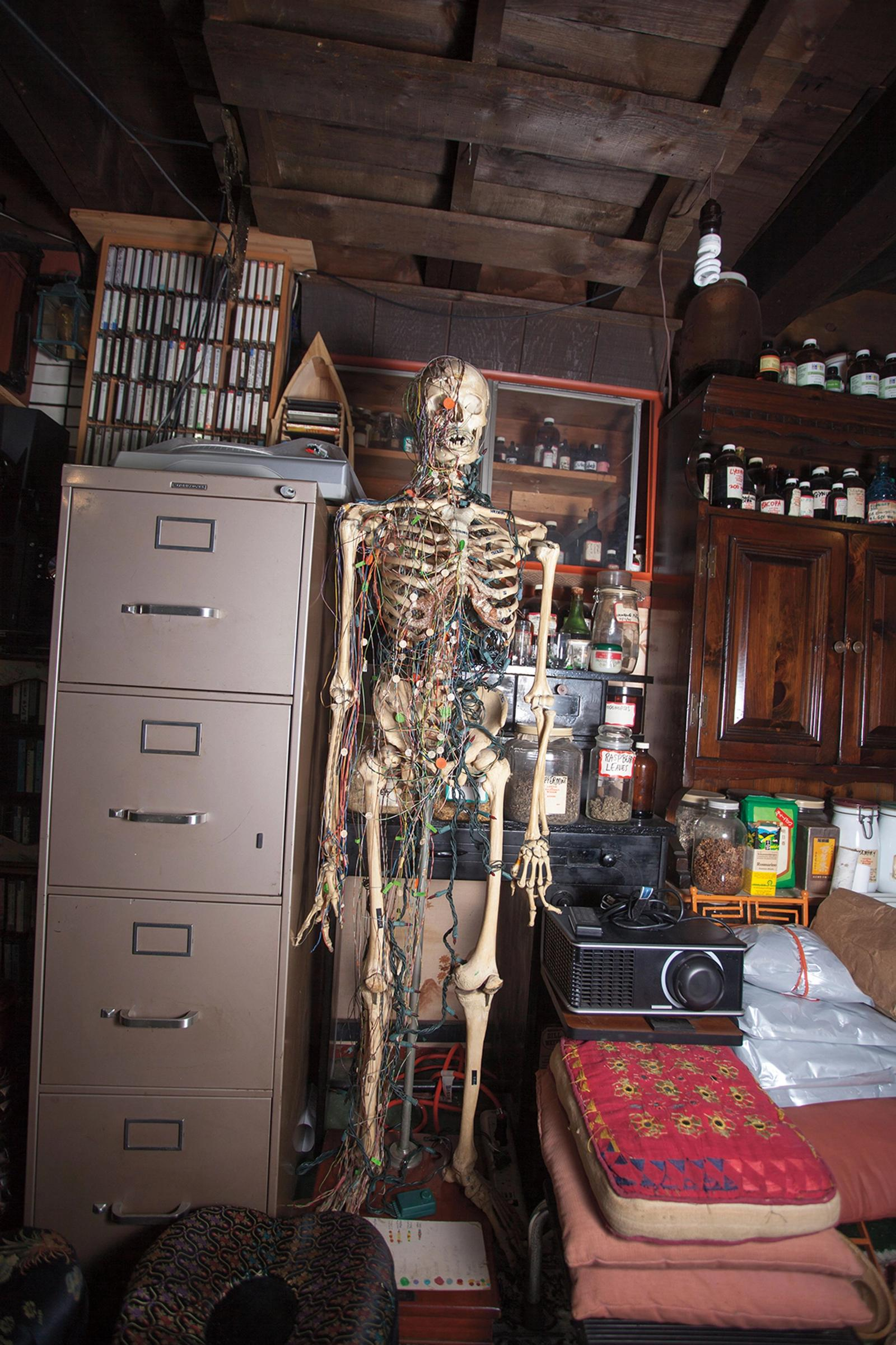 Acupuncture skeleton dealing with the biosciences and the energetic forces of regeneration