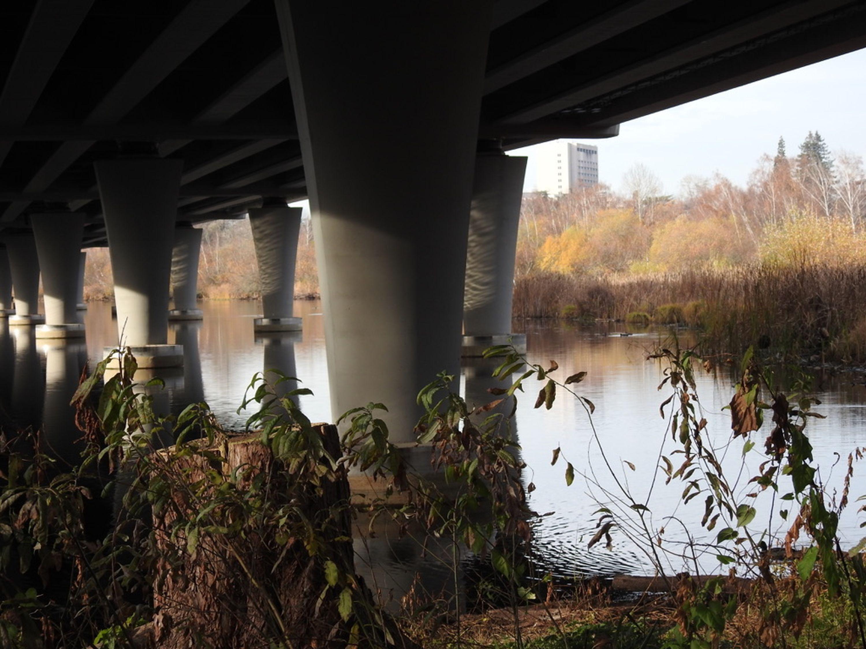 A river and foliage under a bridge.
