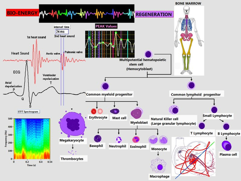 Bio-energy Regeneration Chart
