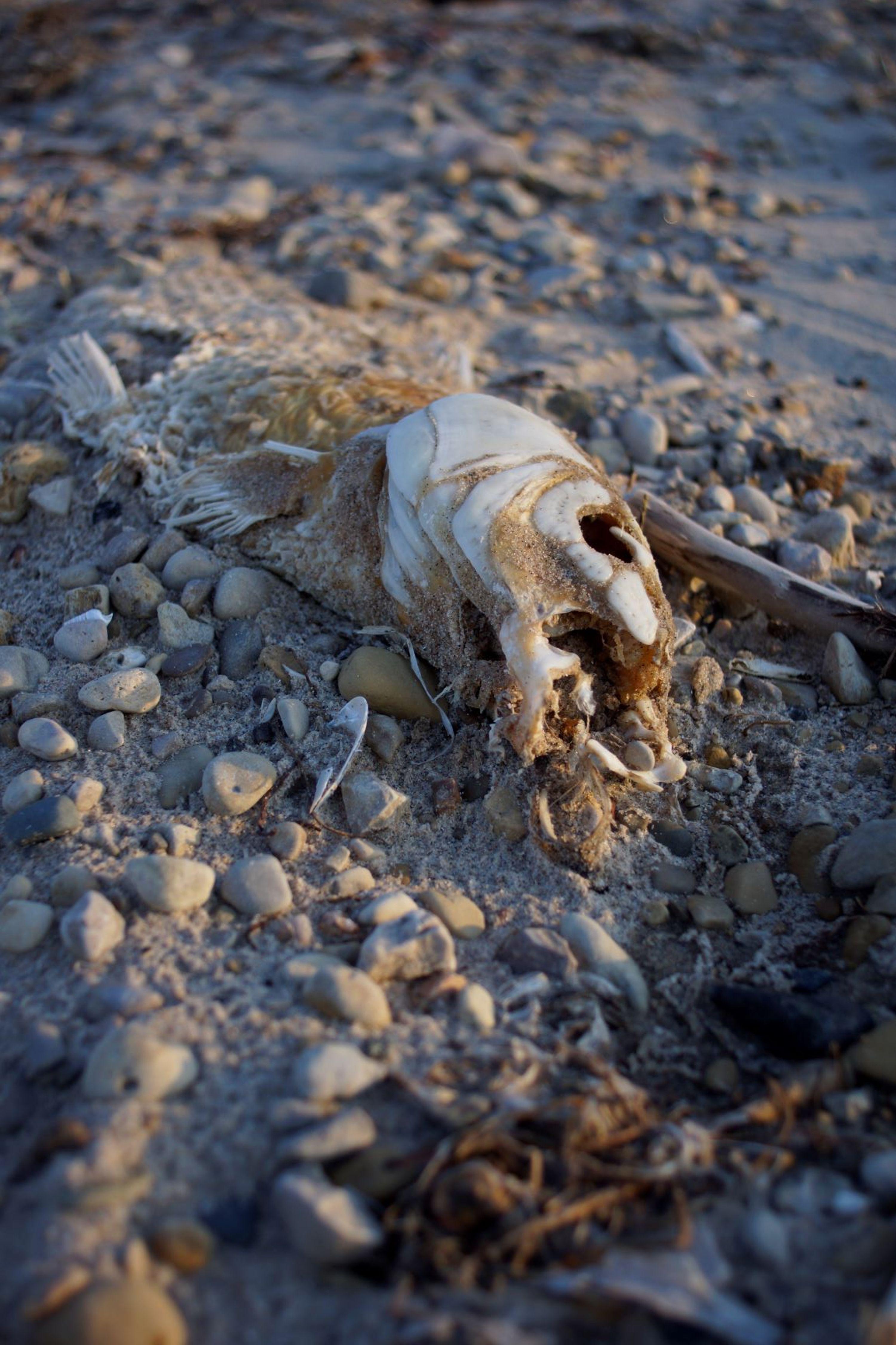 A dead fish on the beach