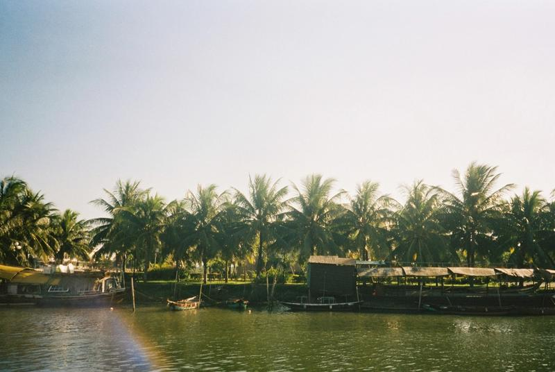 Palm trees by the water
