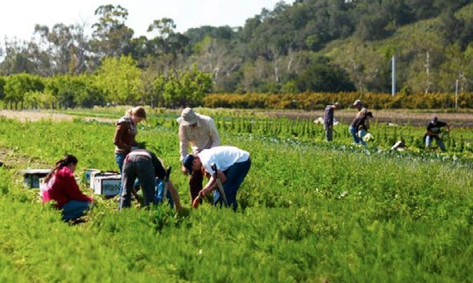 People in Agriculture Field