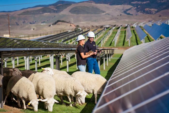 Students at Cal Poly's Gold Tree Solar Farm