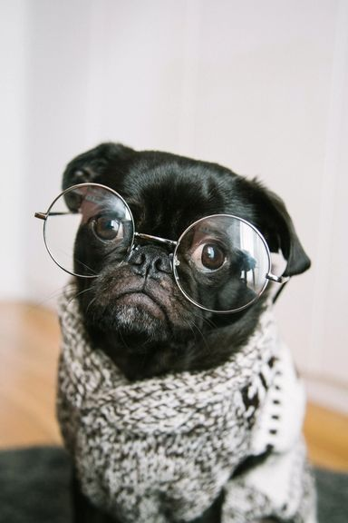 Søt hund med briller.