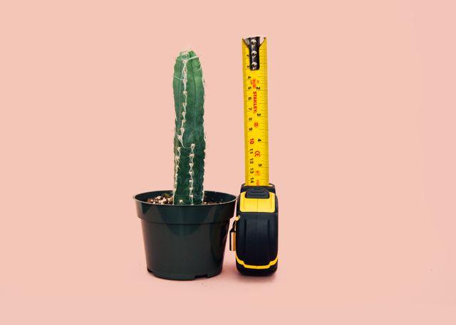 Kaktus som blir målt med målebånd. Foto.