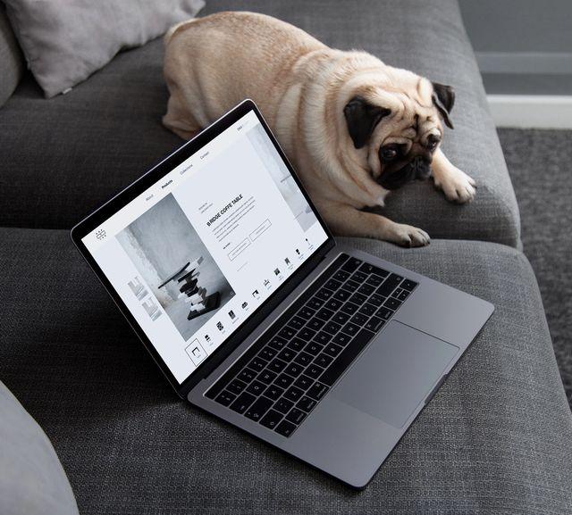 En hund som ligger på sofaen og ser på en mac som har nettsiden til Krafted oppe. Foto