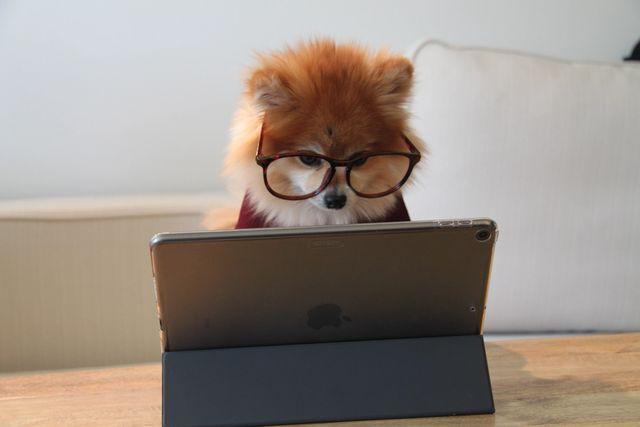 Hund ser på ipad med briller