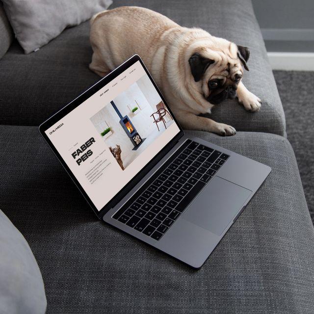 Hund i sofa med laptop ved siden av seg. Foto