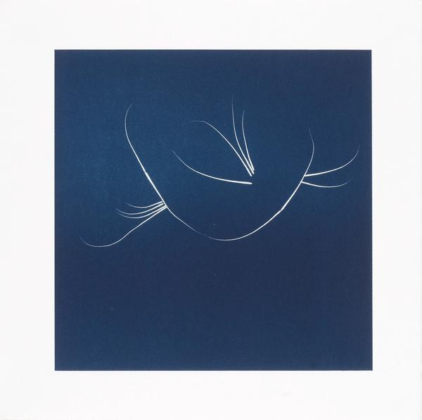 Nina Katchadourian, Whisker Print (1A), 2013. Pace Gallery