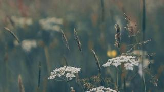 Background image of a meadow