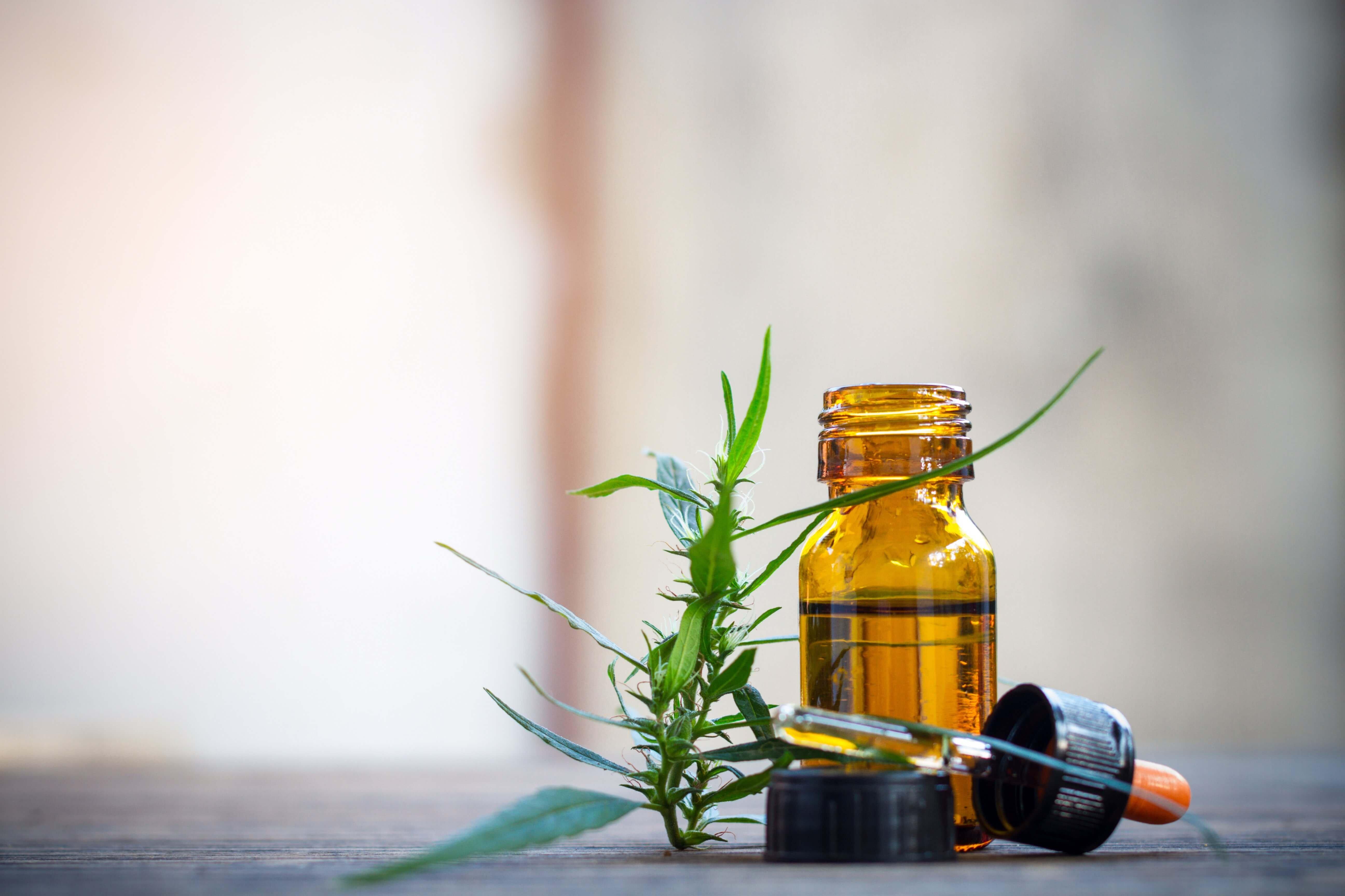 medical marijuana in oil