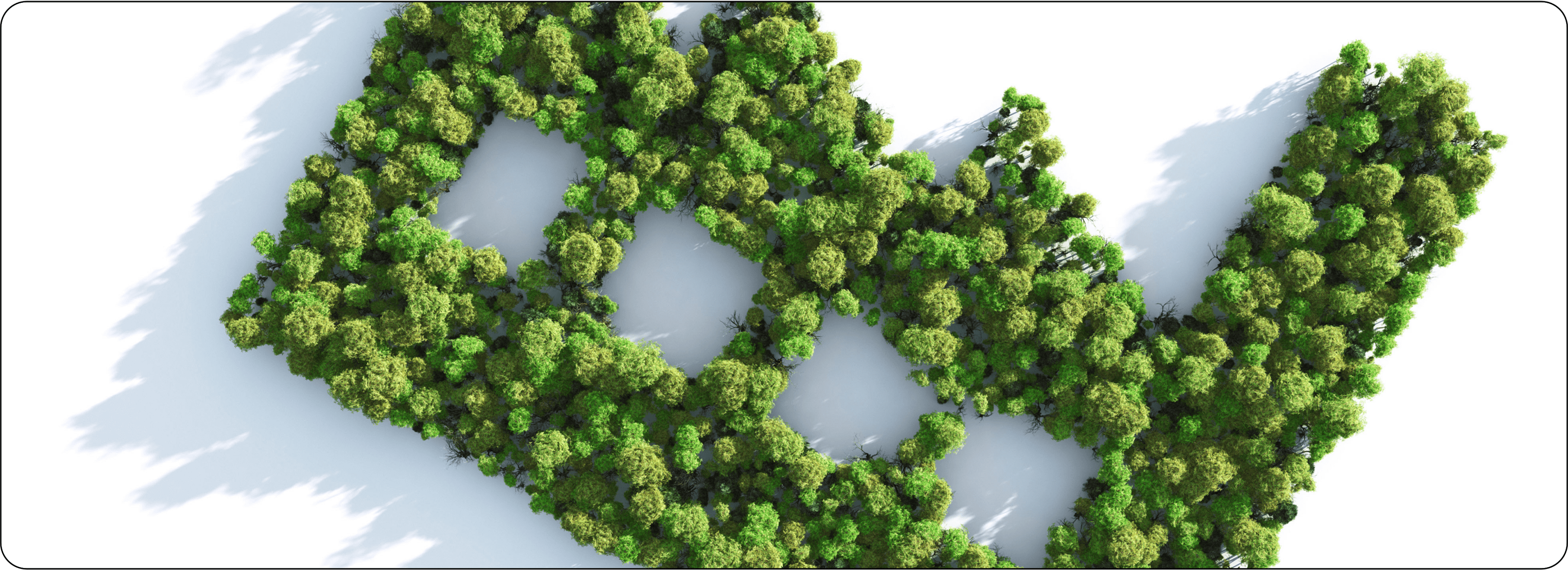 Bird's eye view of monoculture forest