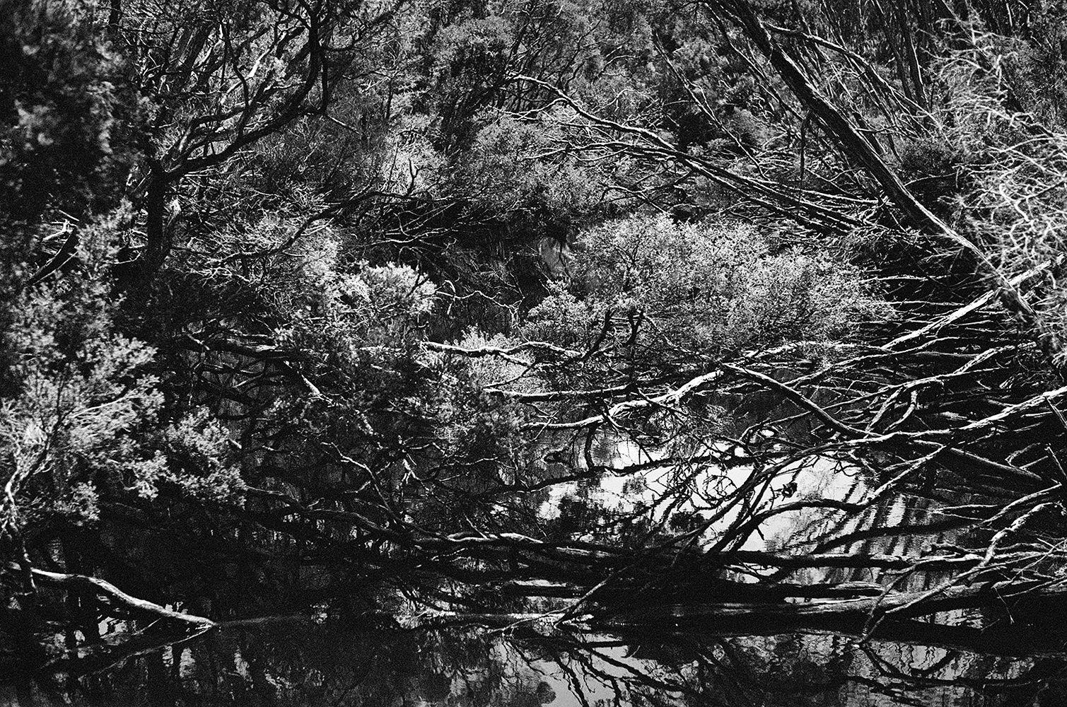 black and white photo of Wilson's prom bushland
