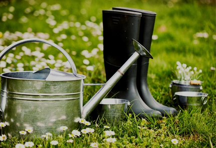 Daisies with metal watering can and gum boots in strathmore