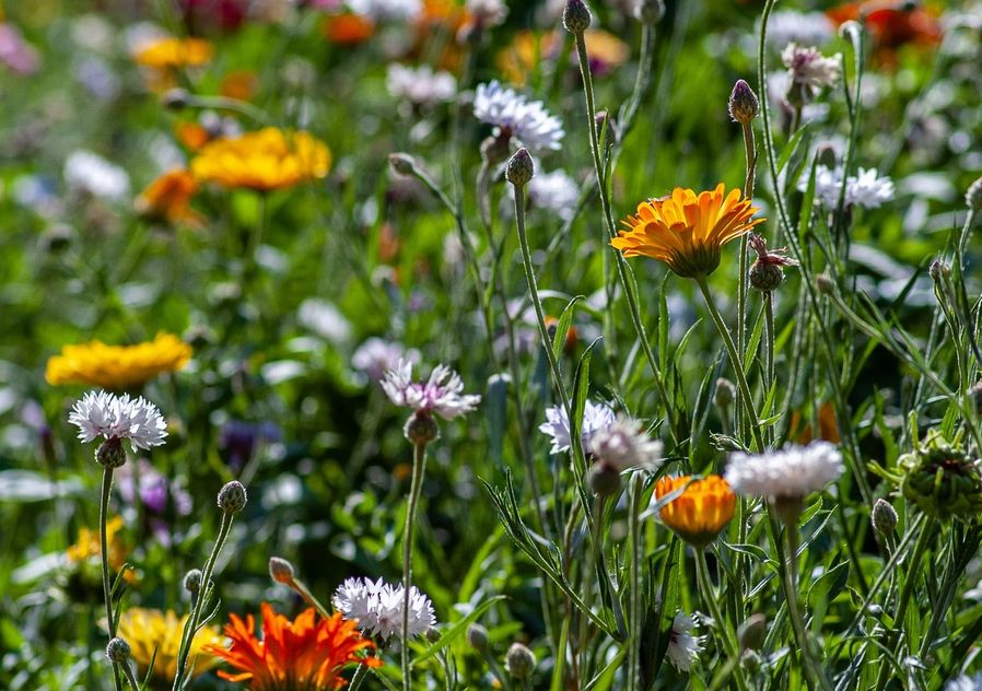 Spring flowers in a field